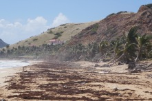 The windward side of the islands are marked by the hurricanes last year.
